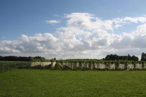 wijngaard-foto-flyer-3