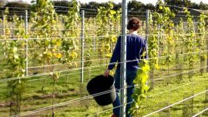 wijngaard-foto-flyer-4